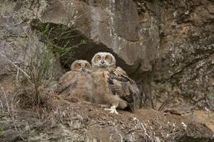 "<div class=""bildtext_en"">1 Rare bird species such as the eagle owl and …</div>"
