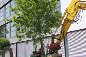 "<div class=""bildtext_en"">2 To mark the 150th company anniversary, an oak tree was planted as a symbol of tradition</div>"