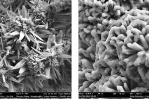 Rasterelektronenmikroskopaufnahmen der äußeren Rostschicht einer korrodierten E-Filterplatte (tafelige Kristalle)Rasterelektronenmikroskopaufnahmen der äußeren Rostschicht einer korrodierten E-Filterplatte (stabförmige Kristalle)