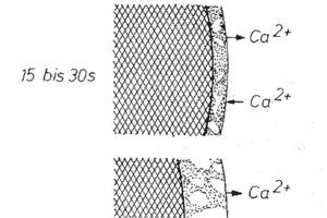 Bildung eines kontinuierlichen Saumes aus Reaktionsprodukten auf der Oberfläche der C<sub>3</sub>S-Partikel in der Frühphase der Hydratation [12]