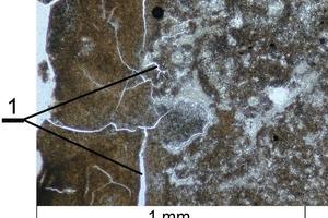 Mikrogefüge des Branntkalks aus dem Jura-Kalkstein mit Makrorissen durch die thermische Zersetzung die im Gefüge verteilt auftreten<br />