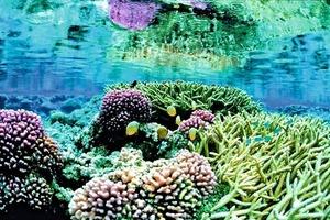 Korallen, aus polymorphem Calciumcarbonat aufgebaut