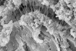 Polymerfäden an Bindemittelmatrix (links Artefakt nach 70°C Wärmelagerung des Mörtels und rechts Dünnbettmörtel nach 28 d Trockenlagerung)<br />